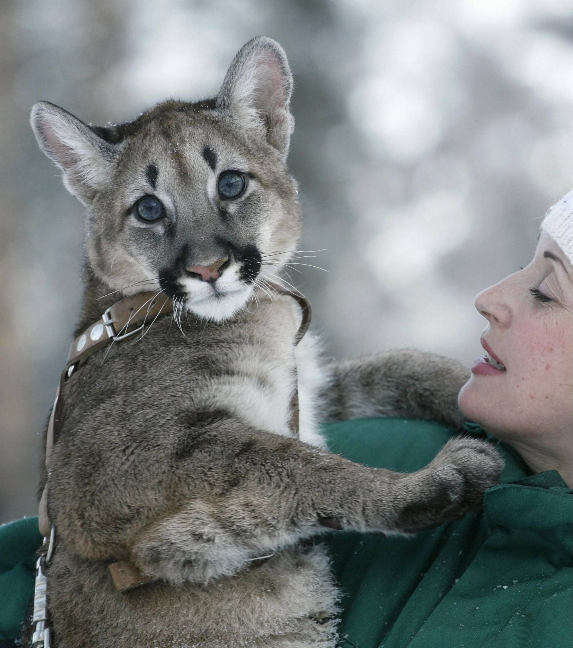 5 Months Old Puma Getting A Hug Animal Pictures Cute Animals Animals