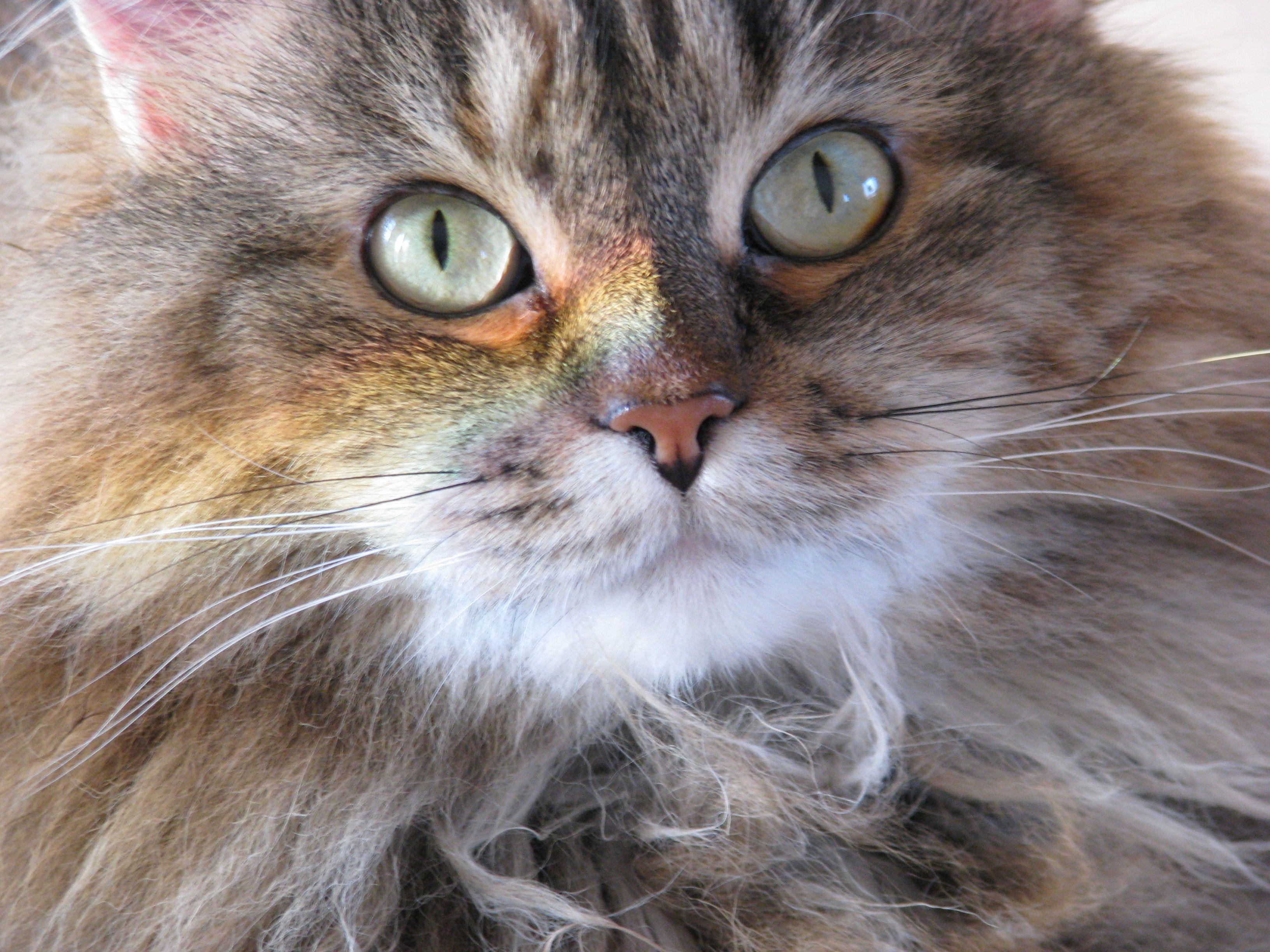 Rainbow Cat Cats, Dogs, Animals