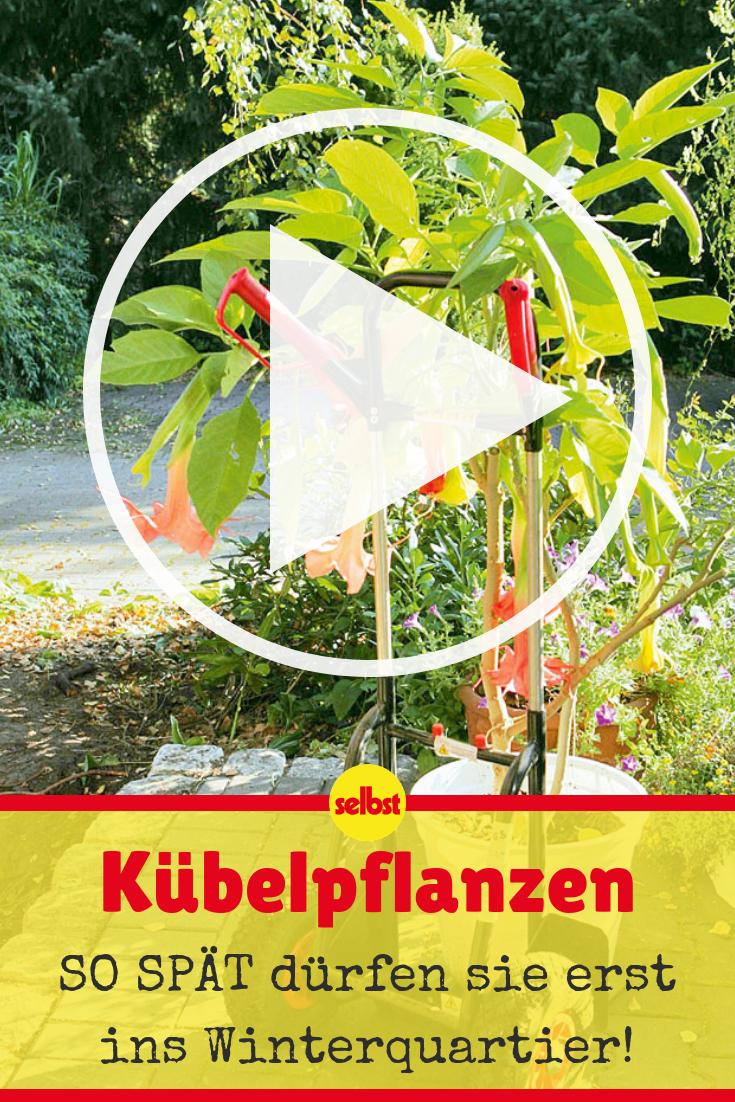 Pflanzen Uberwintern Garten Pinterest