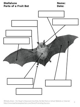 parts of a bat worksheets for stellaluna activities halloween unit Parts of a Rabbit Diagram