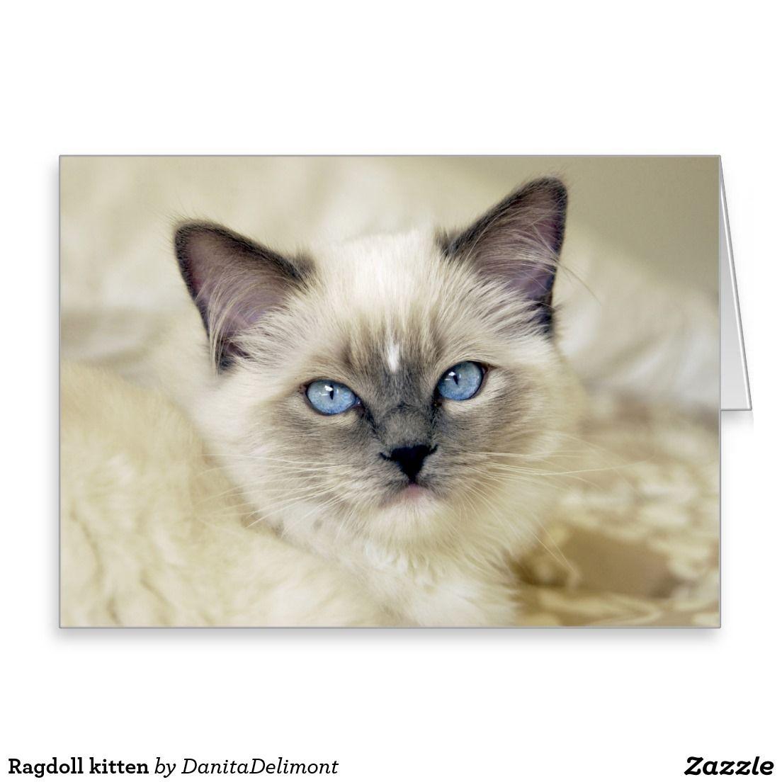 Ragdoll Kitten Zazzle Co Uk Ragdoll Kitten Kitten Kittens Cutest