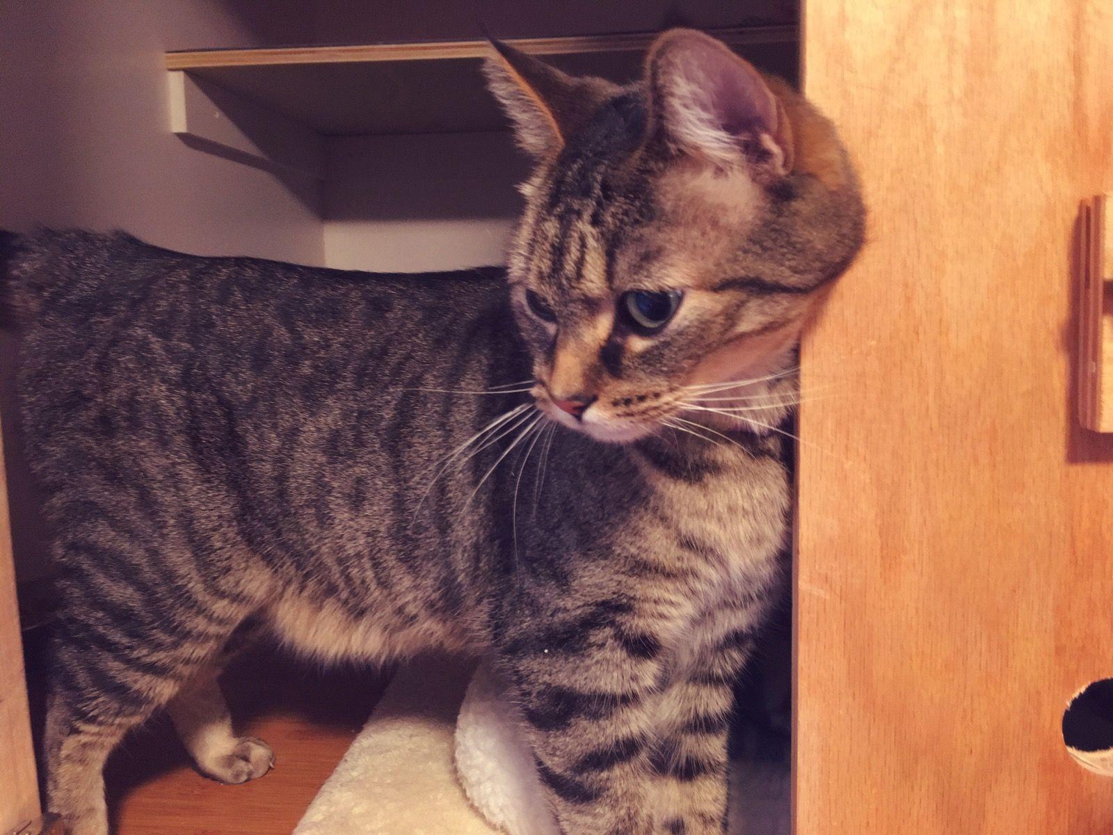 Pin On Charlotte S Cat Shack Cat Boarding