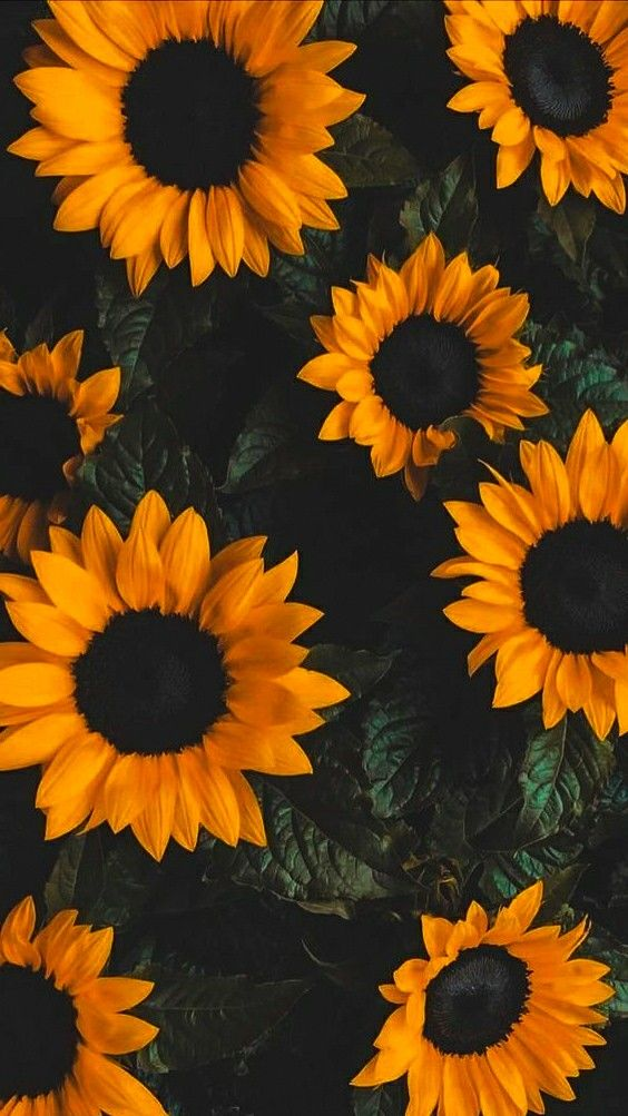 Sunflowers - I edited this.