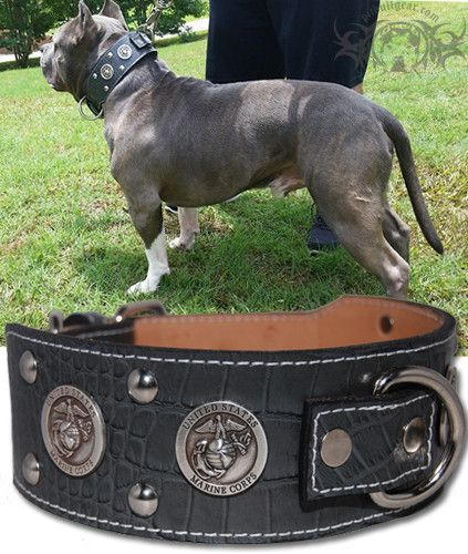 J6 2 1 2 Military First Responder Themed Leather Dog Collar