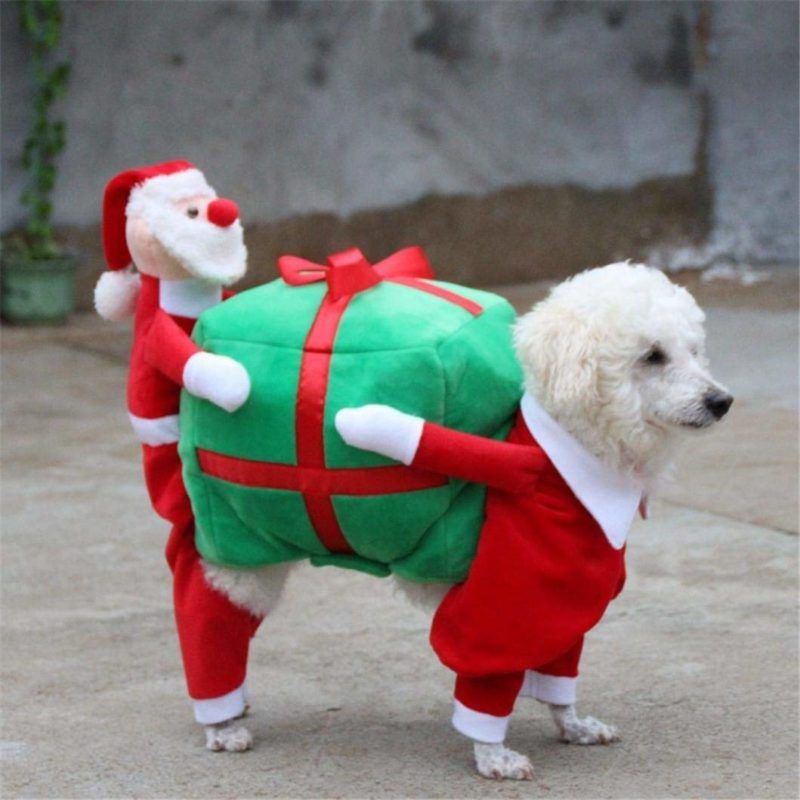 Hunde Kostum 8222 Wichtel 8220 Weihnachtshund Hund Halloween Tierkostum