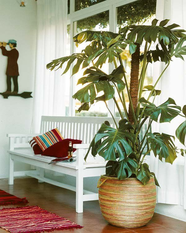 Las 20 plantas de interior m s resistentes rinc n verde artificial plants plants y small - Plantas grandes de interior resistentes ...