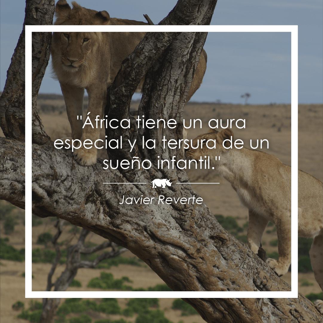 javier-reverte-frase-africa.png (1081×1081)