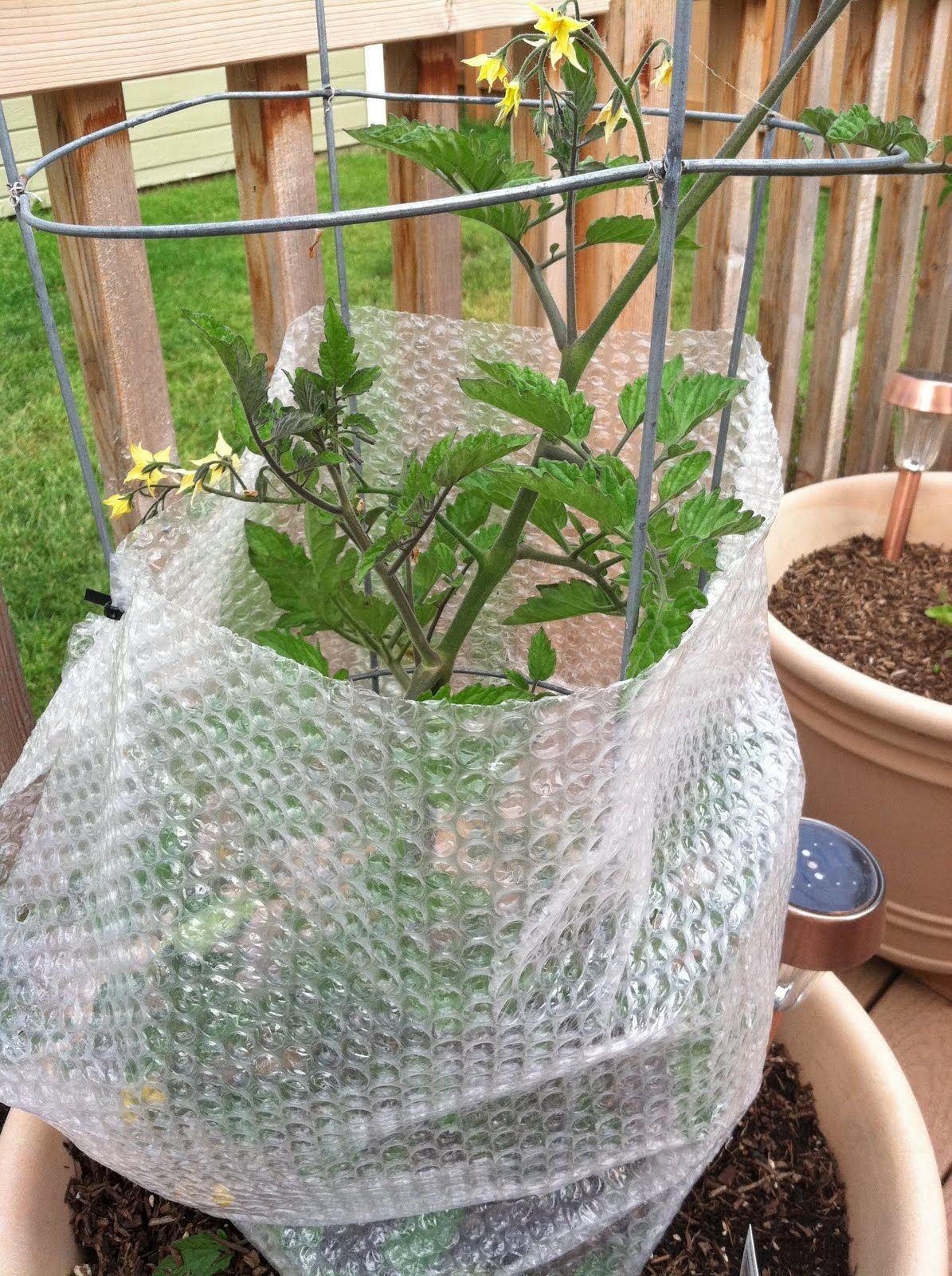 Bubble wrap plant insulation