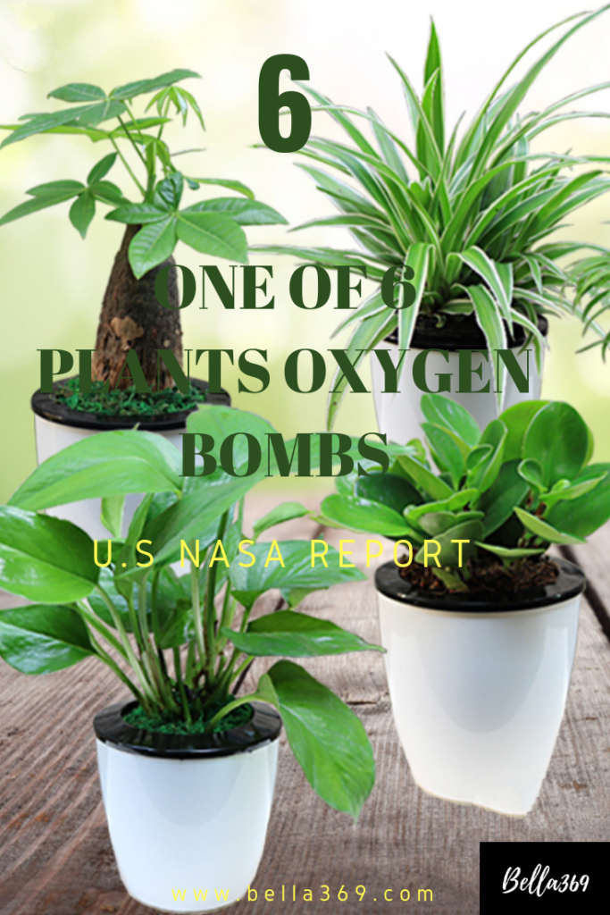 Do you know ? There are 6 Top Plants Oxygen Bomb plants in ...