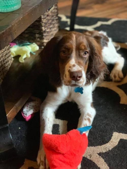 Adopt Smokey on Adoption, Pet care, Pet search