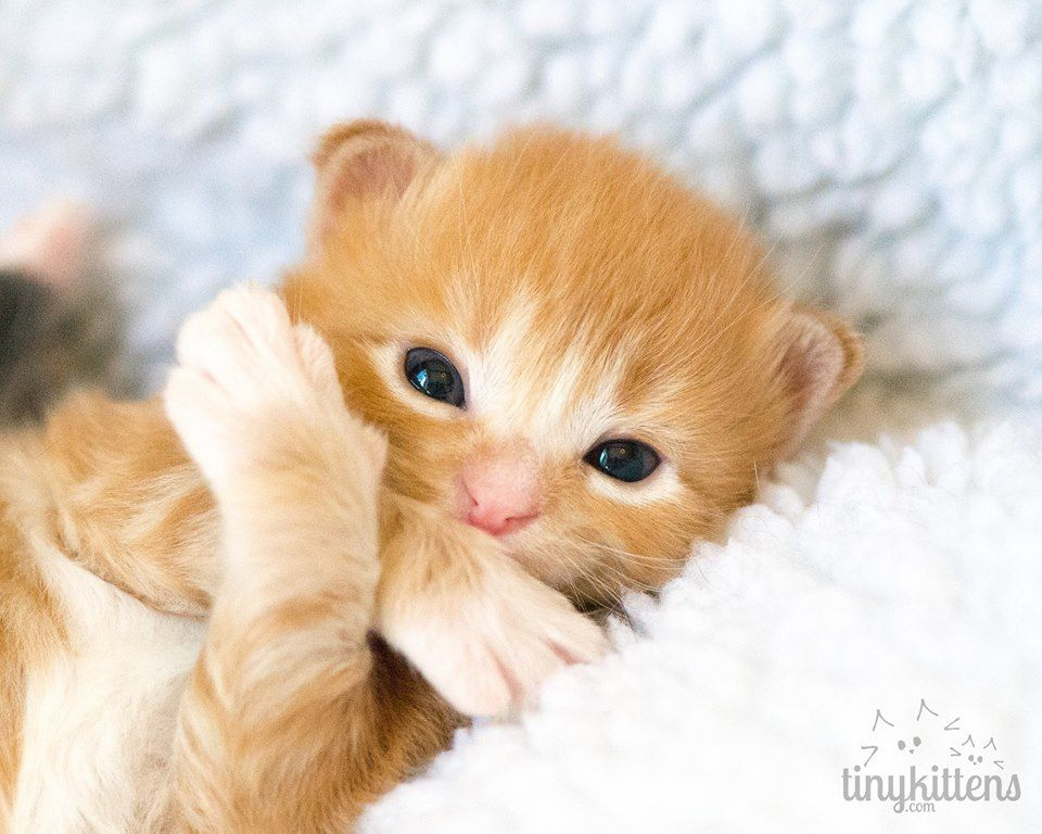 (107) Tinykittens