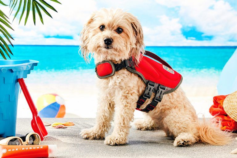 Most Dog Friendly Vacation Destinations In The Us Dog Friends