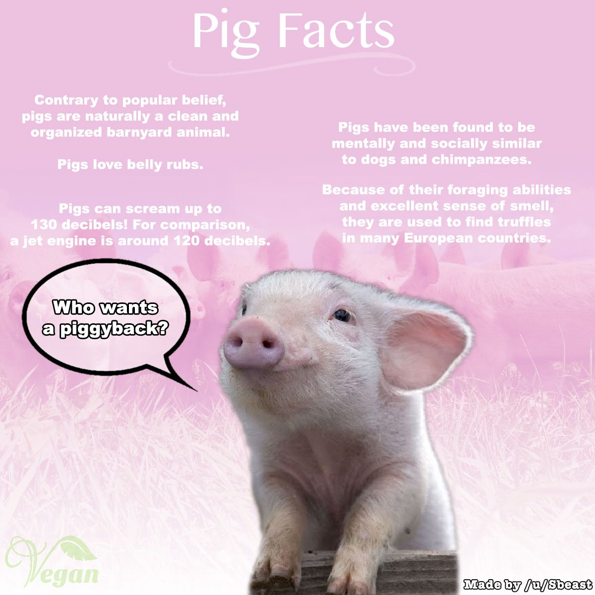 Pig Facts Pig Facts Baby Pigs Pig