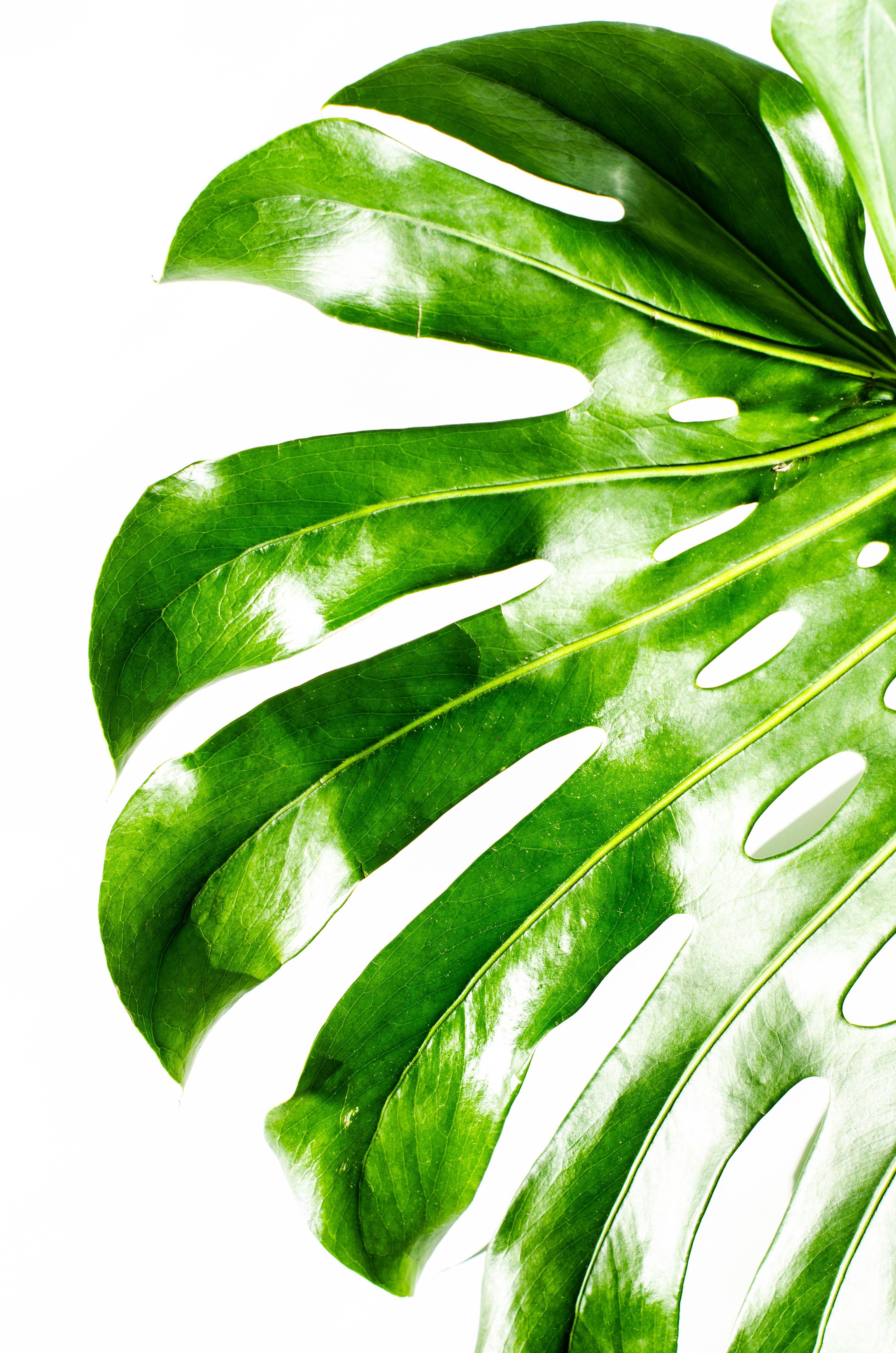 рисунок зеленые листья на белом фоне самая