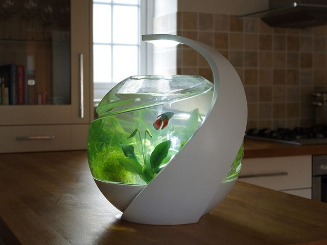 Avo the stylish self cleaning fish tank by susan shelley for Fish that clean tanks