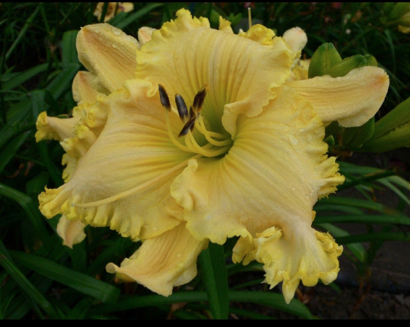 Luxury Brocaded Gown Daylily Ideas - Images for wedding gown ideas ...
