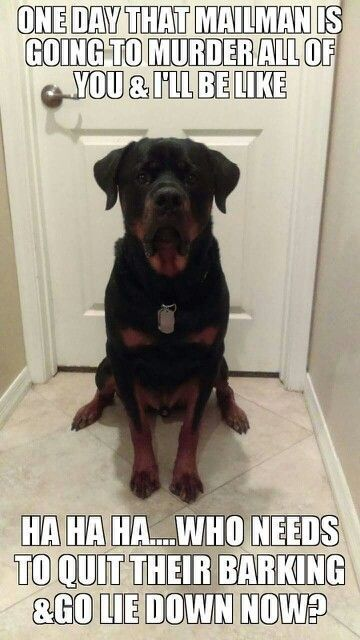 Pin By Candy Davis On Lol Funny Dogs Rottweiler Love Funny Animals
