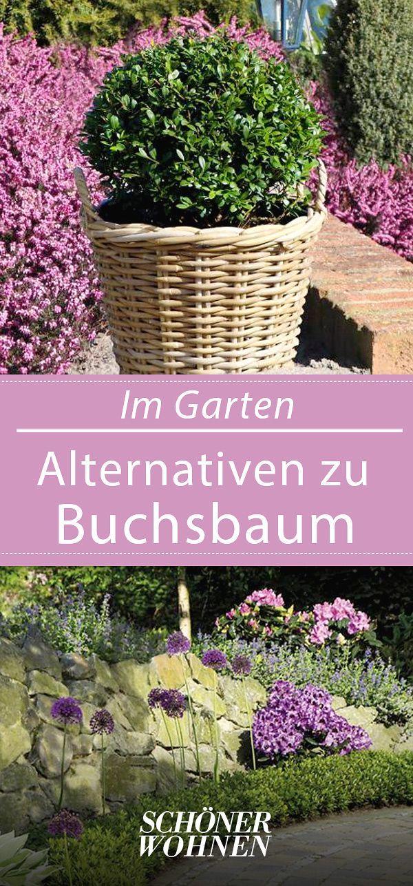 buchsbaum alternativen rhododendron rhododendron. Black Bedroom Furniture Sets. Home Design Ideas