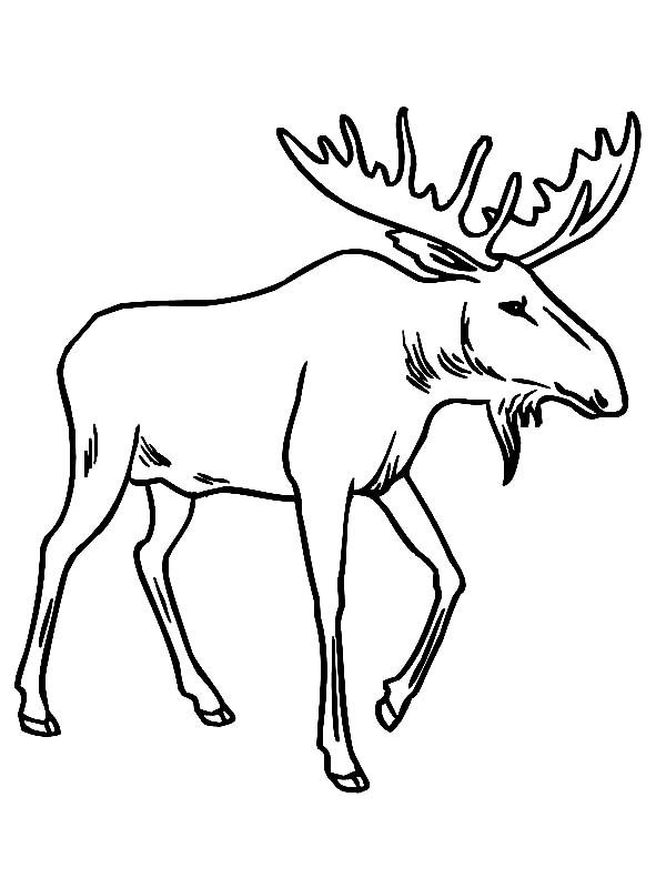 Printable Moose Coloring Page Free