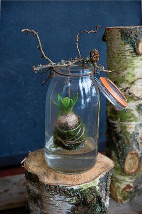Svävande hyacint i glas. #weihnachtsdekoimglas