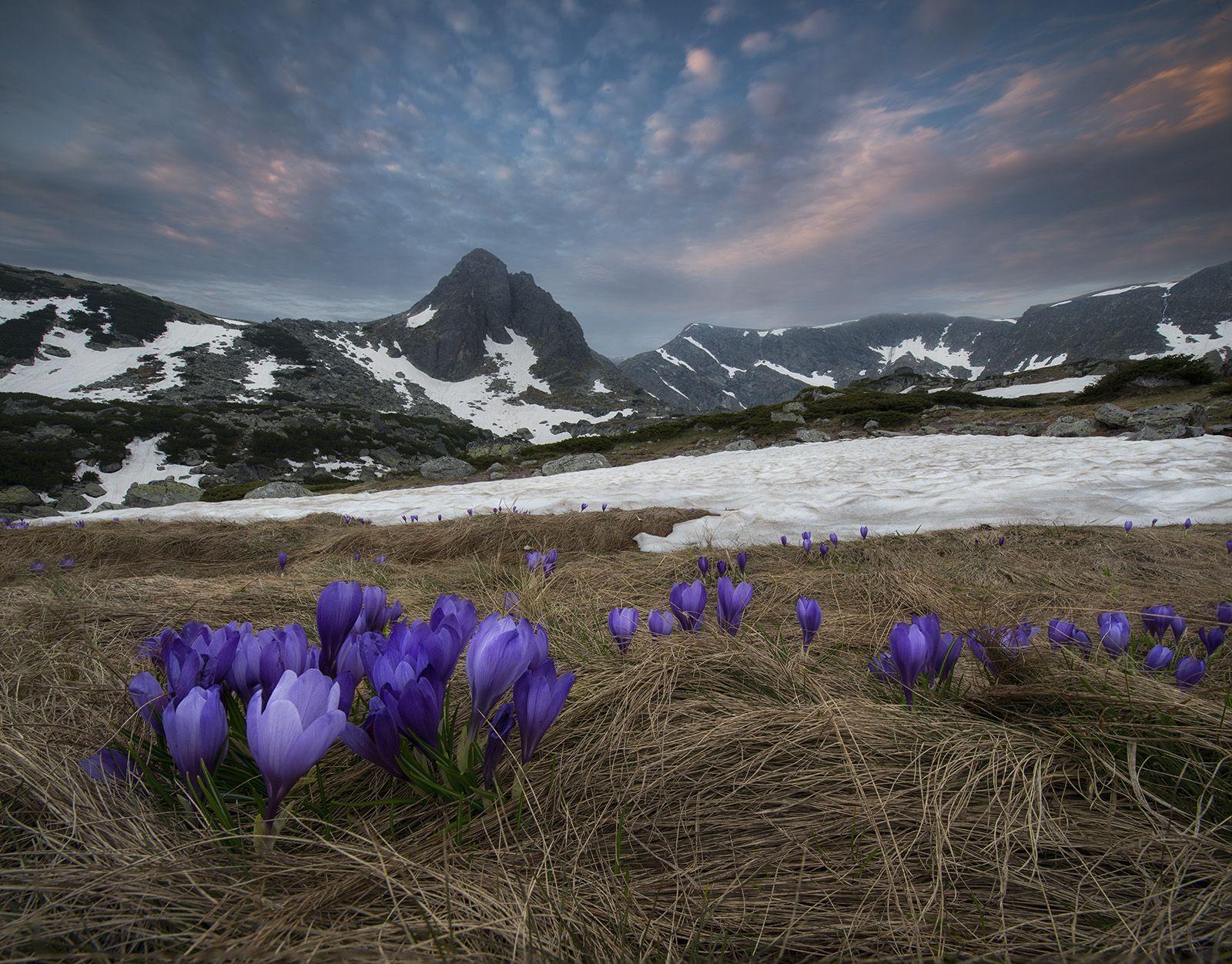 машины красивые горные пейзажи весна с тюльпанами фото сайте