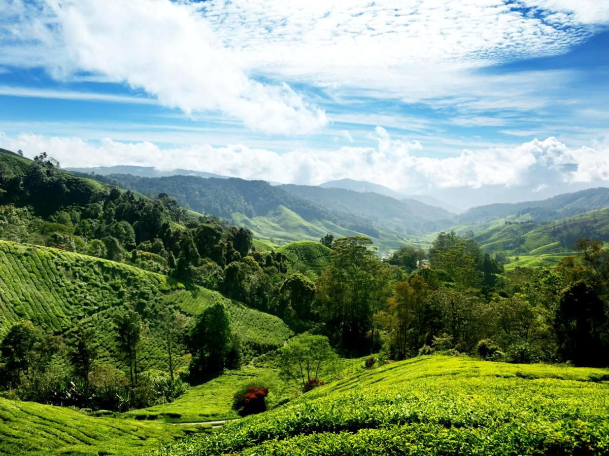 Cameron Highlands, Malaysia asia travel destination