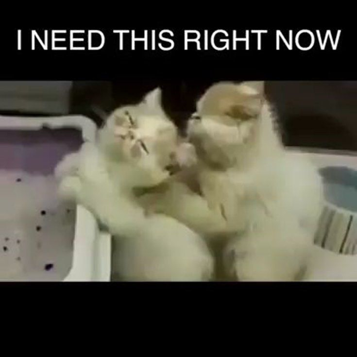 57 Short Inspirational Quotes We Love Best Positive Inspiring Sayings Boomsumo Quotes Cute Baby Animals Cute Funny Animals Funny Animal Videos