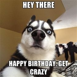 Happy Birthday From A Husky Cat And Dog Memes Dog Quotes Funny