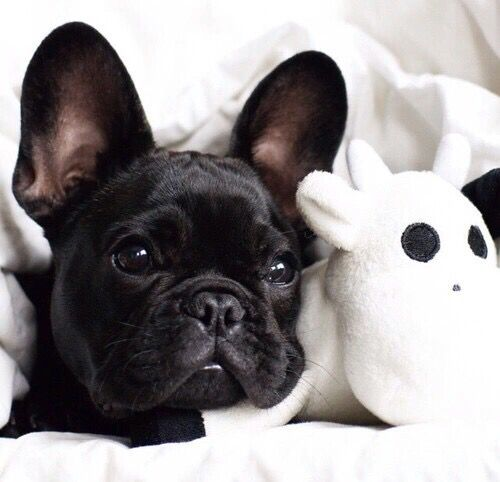 Black French Bulldog Puppy Stuffed Toy French Bulldog Puppy
