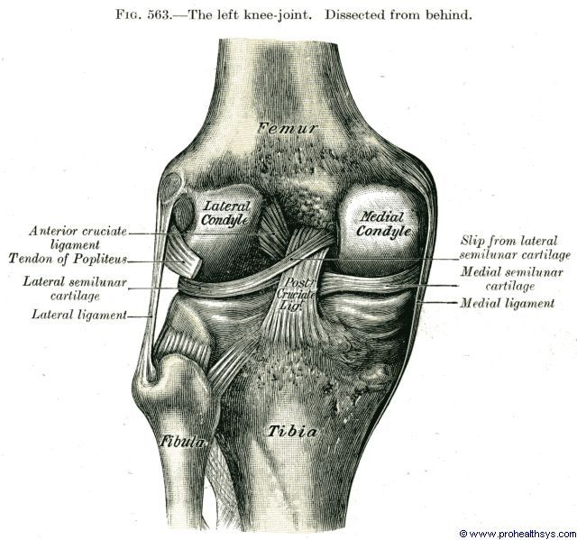 tibiofibular ligaments knee - Google Search | Medical | Pinterest ...