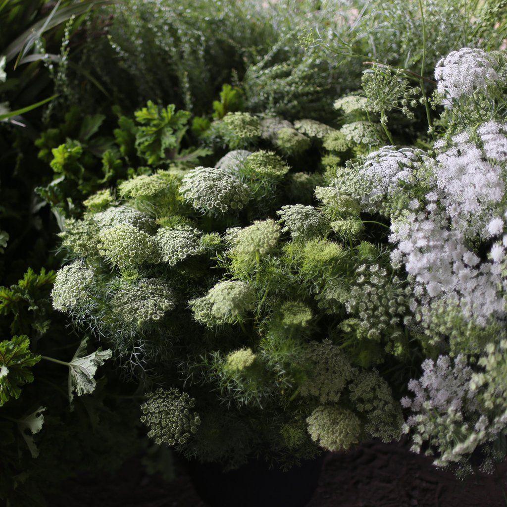 Pin on greenery