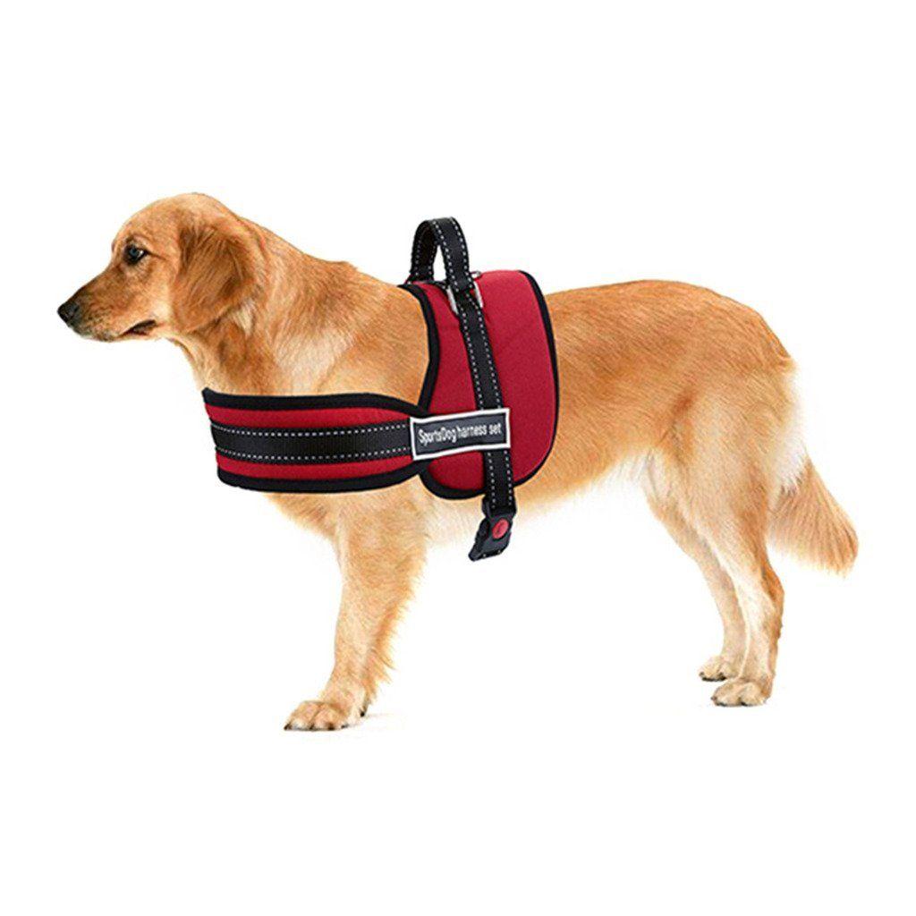 Amazon Com Mogoko No Pull Harness Dog Leash Padded Pet Walking
