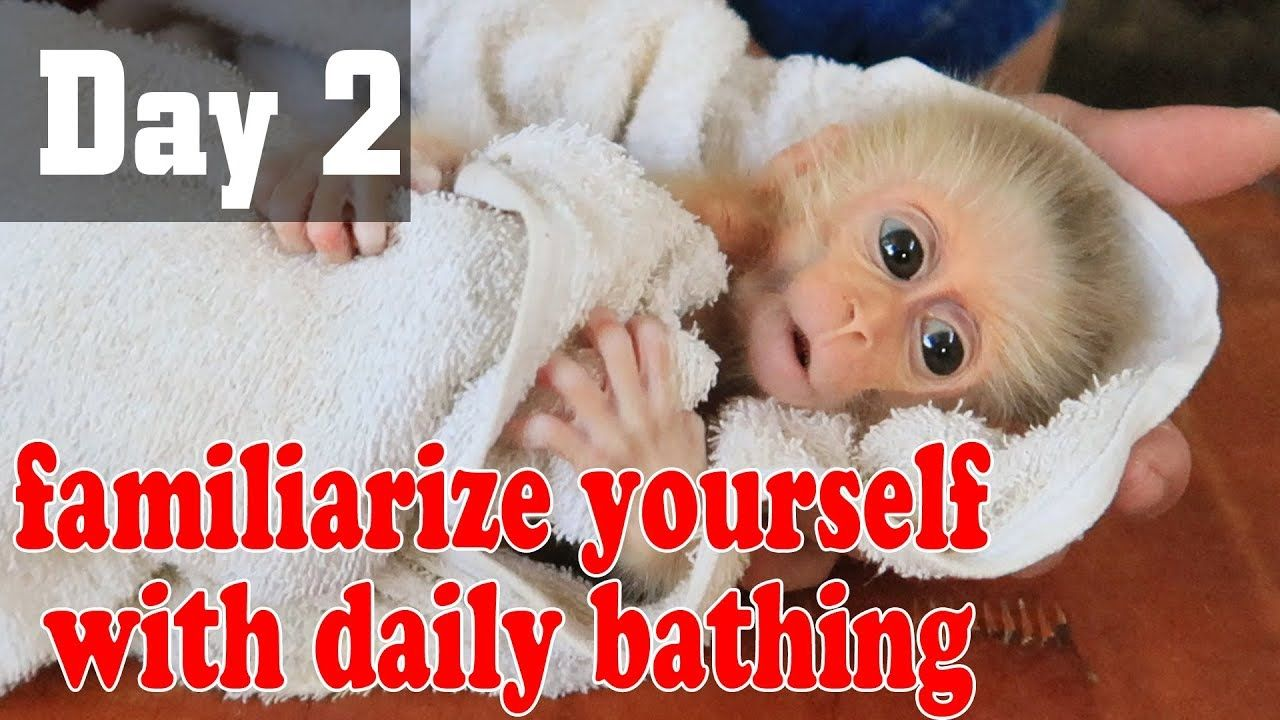 Day 2 Practice Bathing Daily For Emily Youtube With Images Baby Emily 12 Monkeys Animals
