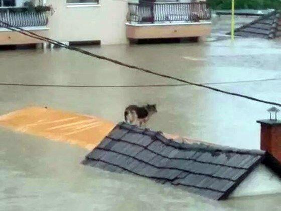 State Of Emergency In Bosnia Help The Animals Bosnia Herzegovina