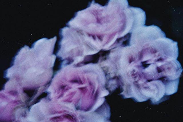 あと今日はお風呂上がりに鼻血ブーになって物心着いた頃からほぼ鼻血が出たことが無い私は1人プチパニックでした笑  #nightimages #ファインダー越しの私の世界 #colors_of_day #オールドレンズに恋をした #オールドレンズの世界#暗がり同盟 #薔薇 #flowerpic #flowerslover #flowerphotography #flowerslovers #phos_japan #2_fineart #感性 #その瞬間に物語を#hibi_jp #lekkerzine #何気ない瞬間を残したい #写真で伝える私の世界 #rox_captures #キリトリセカイ #as_archive #ifyouleave #indies_gram #indy_photolife #jp_mood #screen_archive #coregraphy #HUEART_life #関西写真部