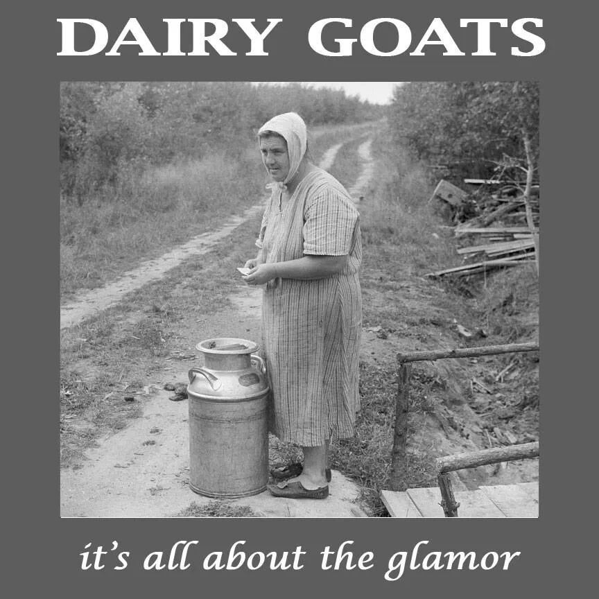 This is what happens when you drink too much goat milk! I