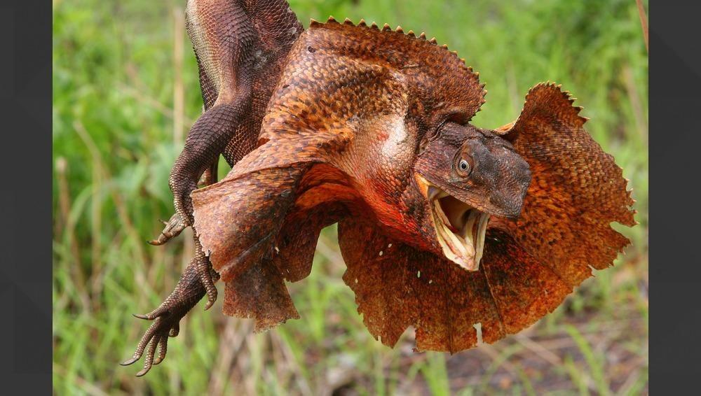 Pin On Frogs Lizards Snakes Chameleons