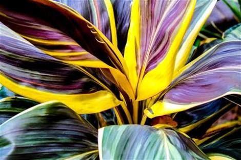 plants photography tropical - Pesquisa Google
