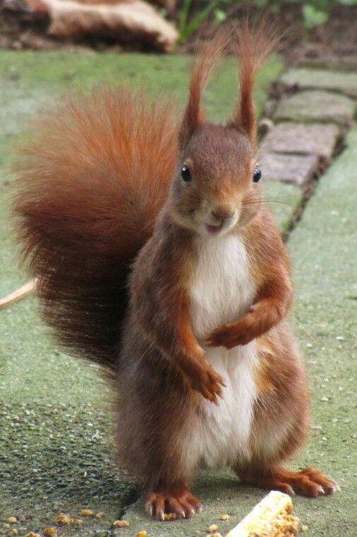 Pin Von Agnes Bus Auf Animals Cute Funny Interesting Eichhornchen Niedliche Eichhornchen Eichhornchen Bilder