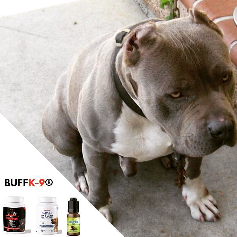 Pitbull Muscle Building Supplements For Health And Immune System