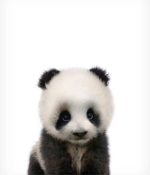 Zdjecie Lustige Tierbabys Baby Panda Pandas