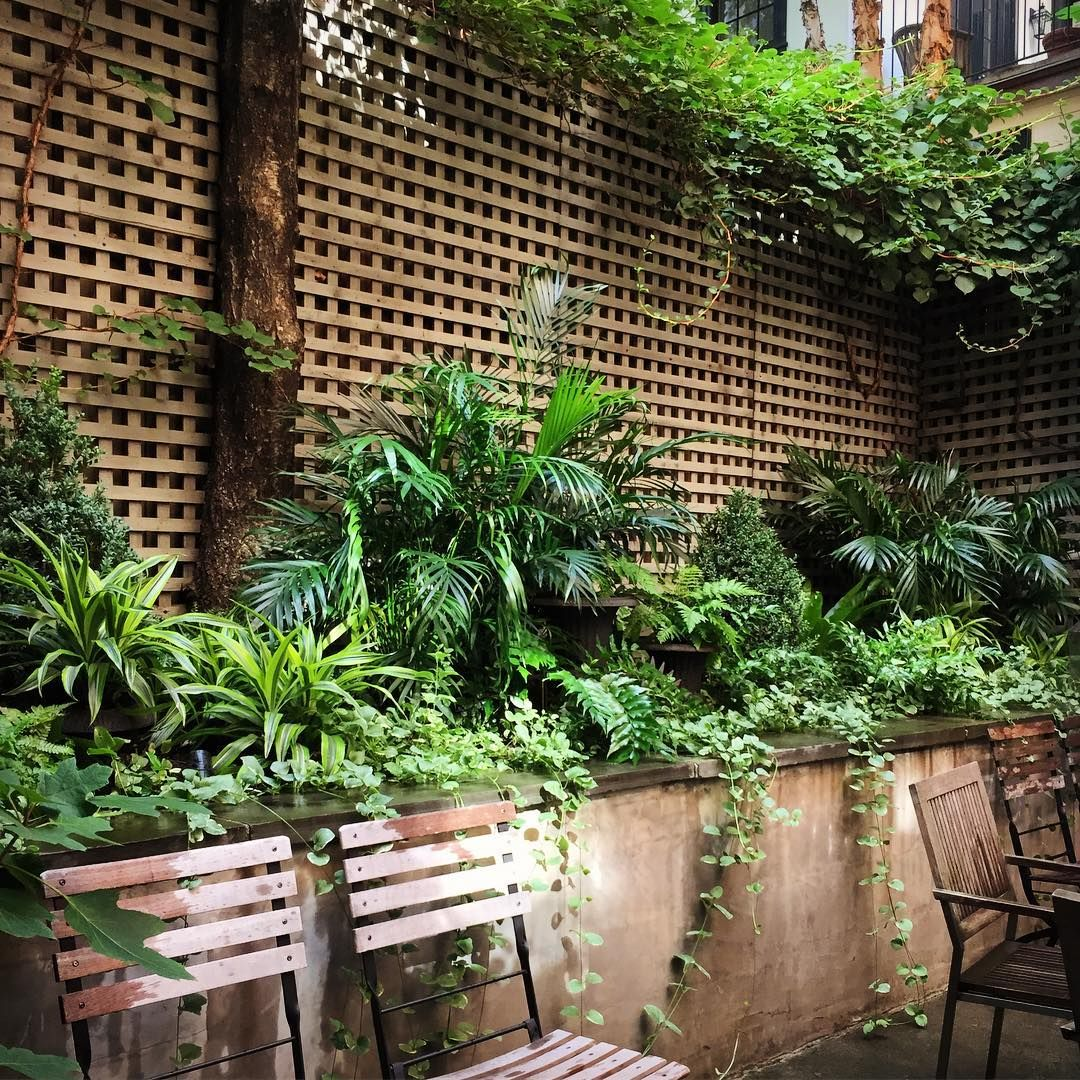 A Secret Garden in the West Village #marshallbackdesigns #nyc #landscape #design #vines #urban #gardening #gardendesign #palms