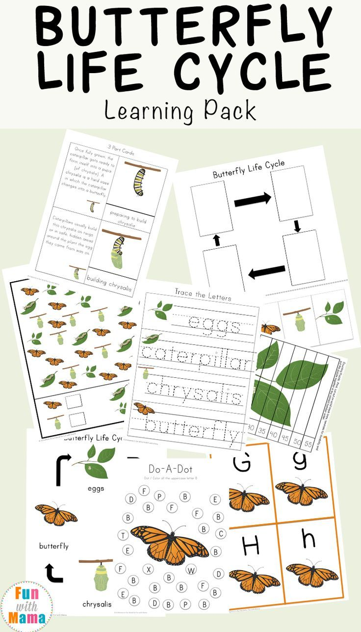 Butterfly Life Cycle Learning Pack | Butterfly life cycle ...