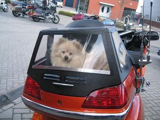 Gl1800riders Com Forums 4 General Mc Message Board 162144 Custom Dog Carrier Html Action Thread Dog Bike Carrier Dog Carrier Biker Dog