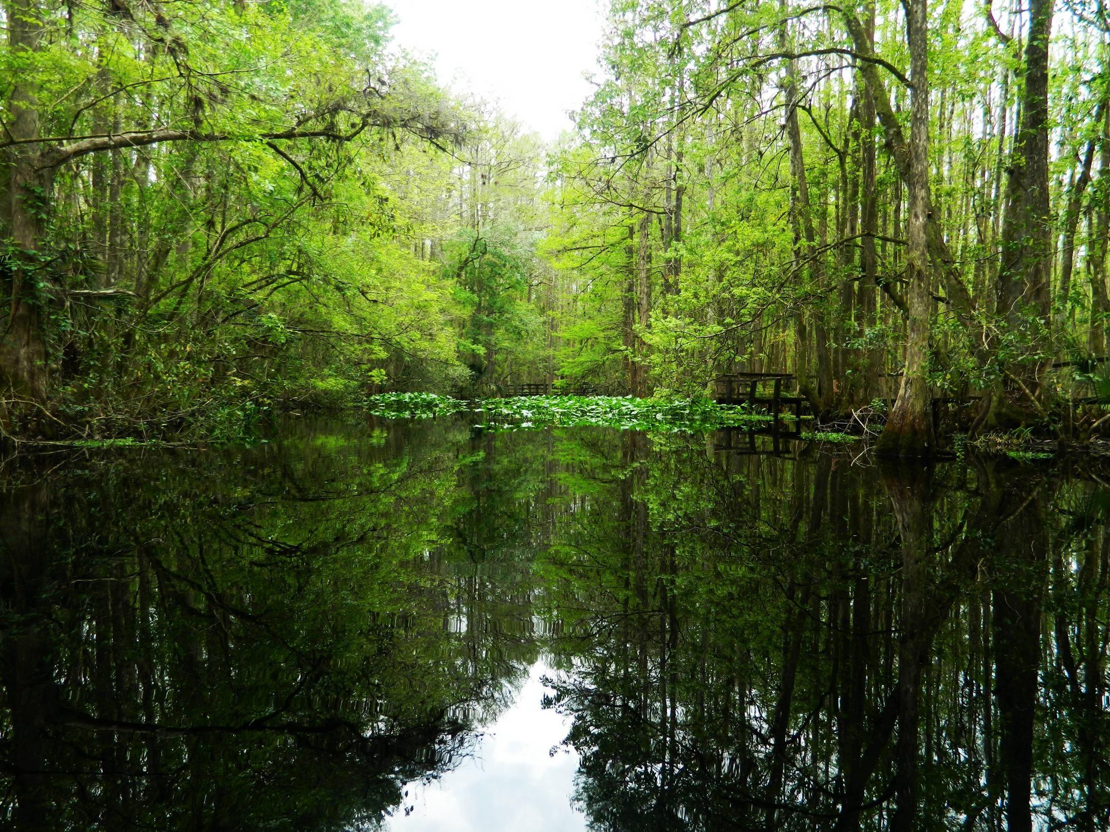 Highlands Hammock State Park Florida Oc 4320 3240 Reddit State Parks Florida Places To Visit