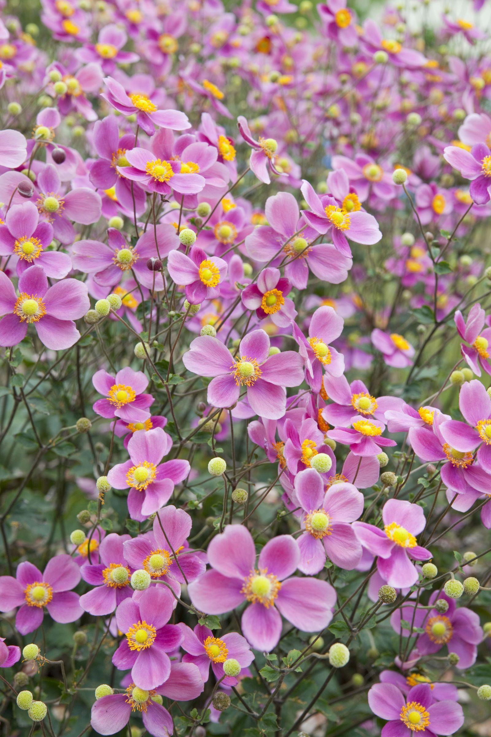 20 Fall Flowers And Plants For An Autumn Garden #Gardenplants