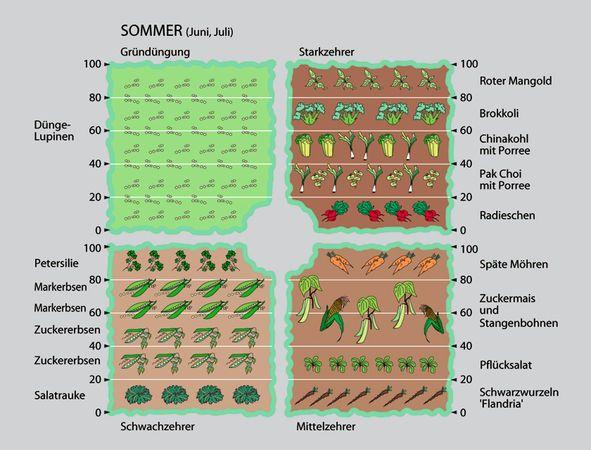 Die besten 25+ Fruchtfolge Ideen auf Pinterest Mischkultur - gemusegarten anlegen pflanzplan