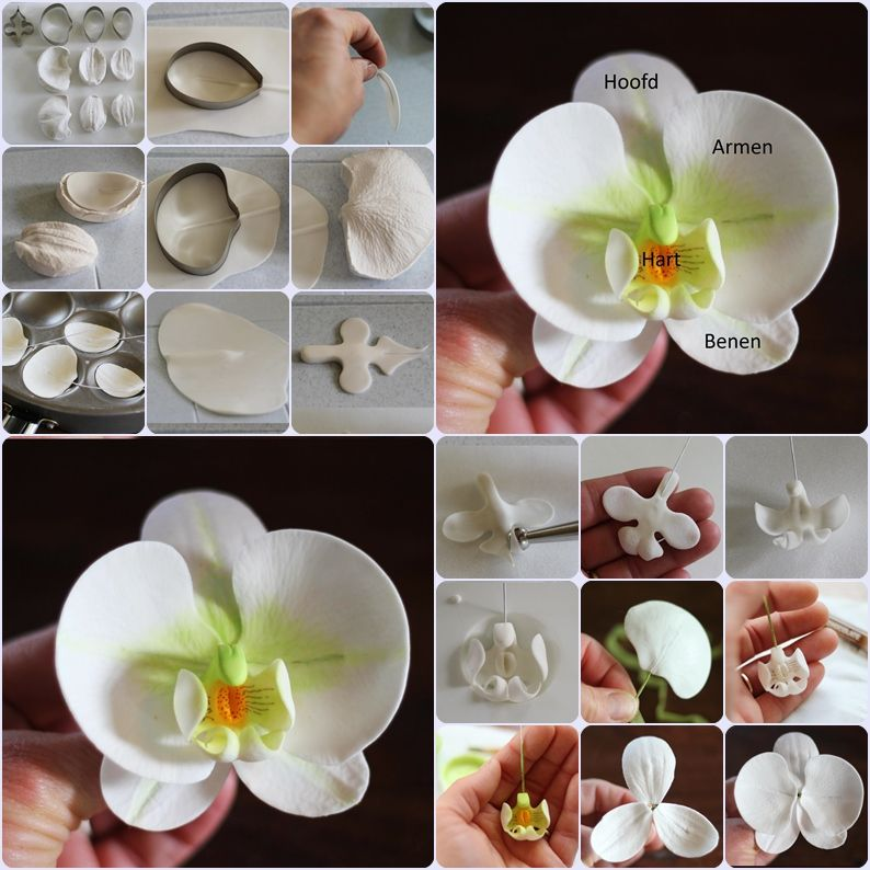 Photo of orchid step by step