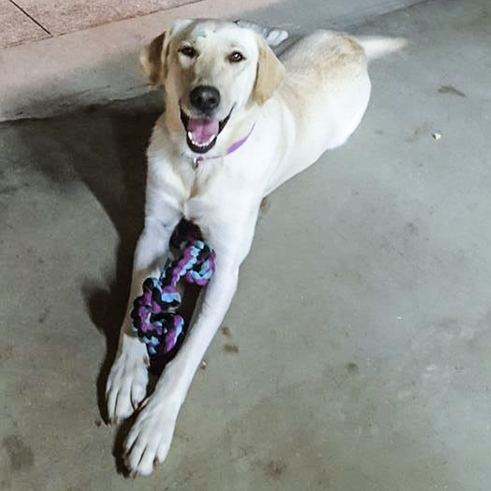 Lost Dog Female Saint Clairsville, OH, USA 43950