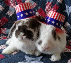 4th of july bunnies | Cute Bunnies - House Rabbit, Pet ...